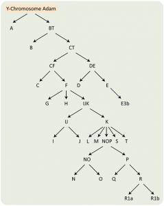 Y-Chromosomal Lineage