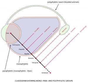 phylogenetic groups